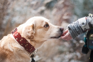 Liability Insurance for Dog Bite Claims in Salt Lake City, UT